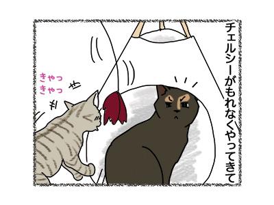 11062018_cat2.jpg