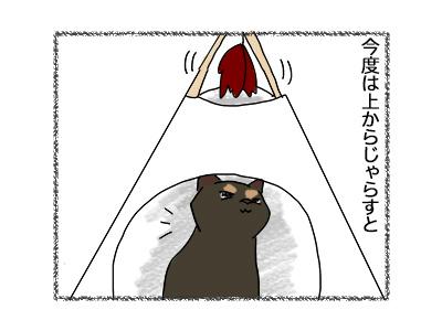 11062018_cat4.jpg
