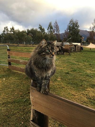 11072018_cat2.jpg