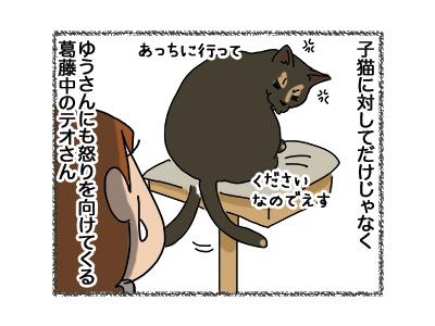 12042018_cat1.jpg