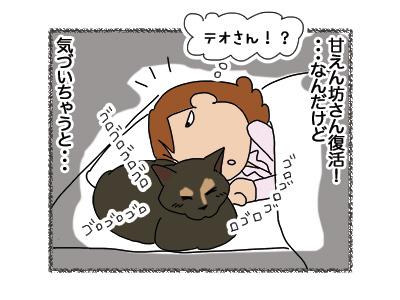 12042018_cat4.jpg