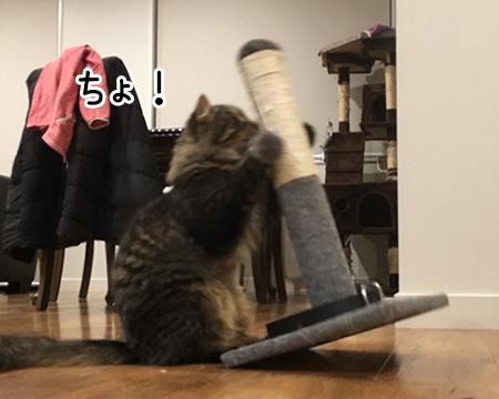 12052018_cat2.jpg