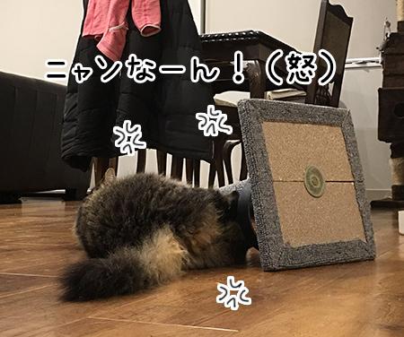 12052018_cat3.jpg
