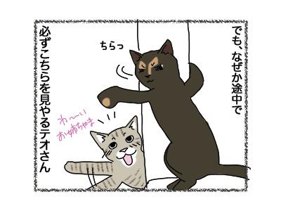 12062018_cat2.jpg
