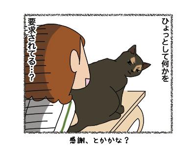12062018_cat5.jpg