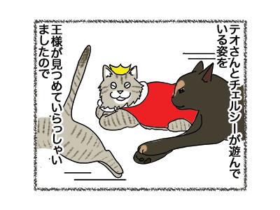 13062018_cat1.jpg