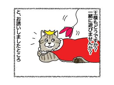 13062018_cat2.jpg