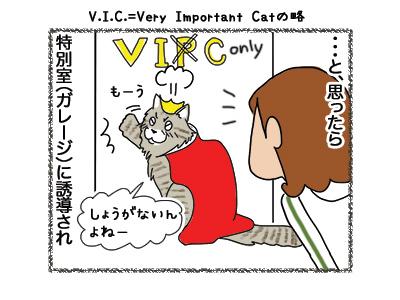 13062018_cat4.jpg