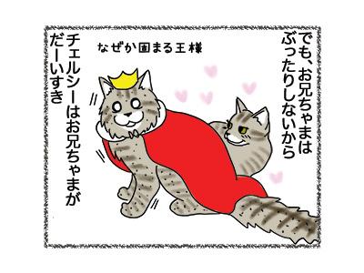 14052018_cat2.jpg