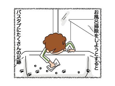 14062018_cat3.jpg
