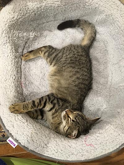 15052018_cat2.jpg