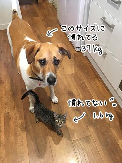15052018_cat4.jpg