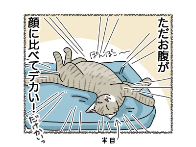 15062018_cat4.jpg