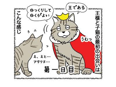16042018_cat1.jpg