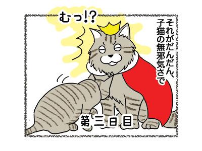 16042018_cat2.jpg