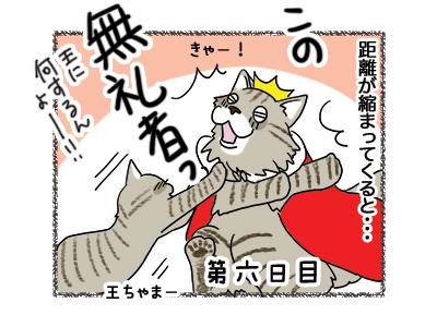 16042018_cat3.jpg