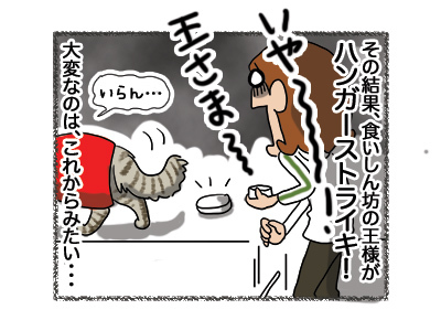 16042018_cat4.jpg