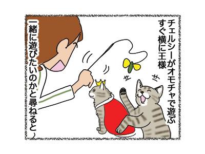 16052018_cat1.jpg