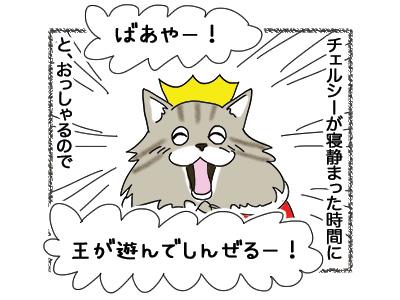 16052018_cat3.jpg