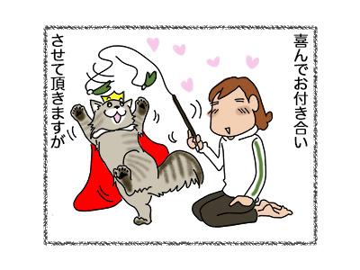 16052018_cat4.jpg