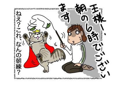 16052018_cat5.jpg