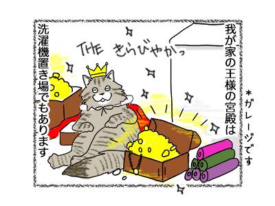 16062018_cat1.jpg