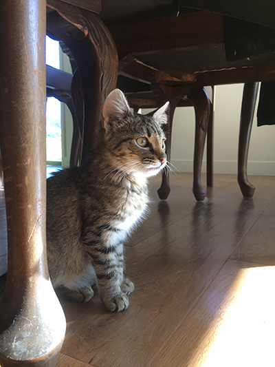 17042018_cat3.jpg