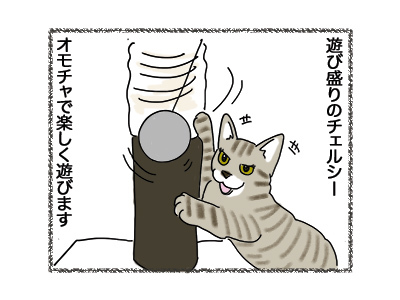 17052018_cat1.jpg