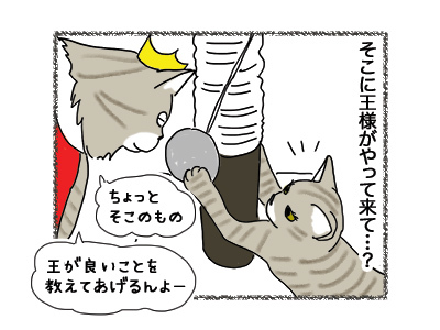 17052018_cat2.jpg