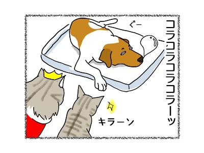 17052018_cat4.jpg