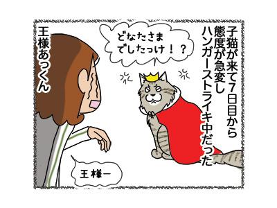 18042018_cat1.jpg