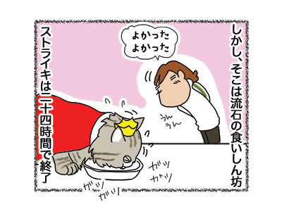 18042018_cat2.jpg