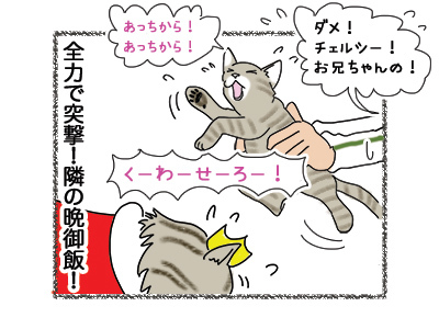 18052018_cat4.jpg