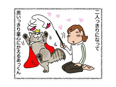 18062018_cat3.jpg