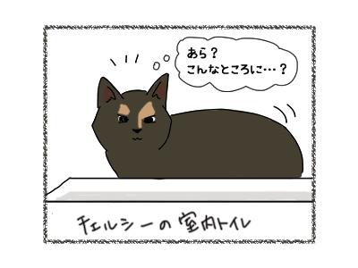 19062018_cat1.jpg