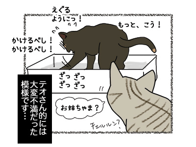 19062018_cat4.jpg