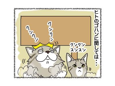 20062018_cat3.jpg