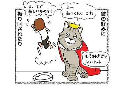 21042018_cat3.jpg