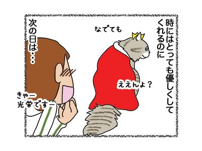 21042018_cat4.jpg
