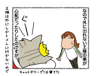 21052018_cat2.jpg