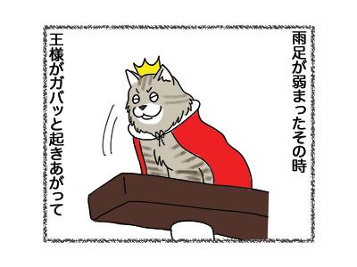 21052018_cat3.jpg