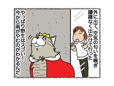 21052018_cat4.jpg