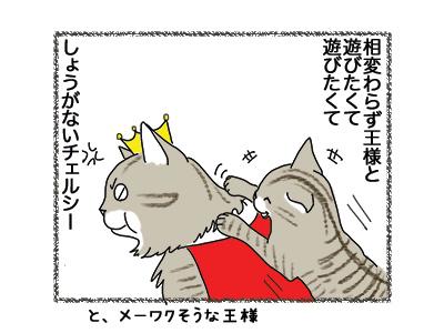 21062018_cat1.jpg