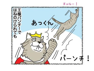 21062018_cat2.jpg