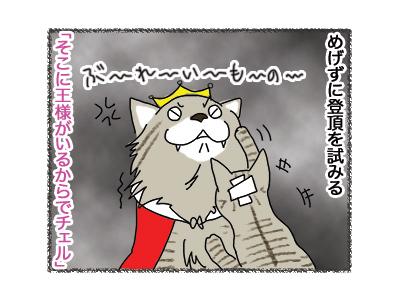 21062018_cat3.jpg