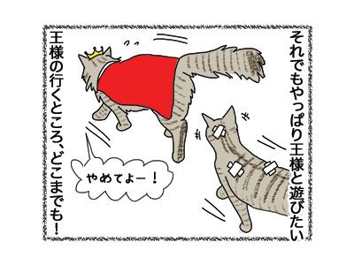 21062018_cat5.jpg