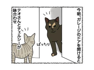 22052018_cat1.jpg