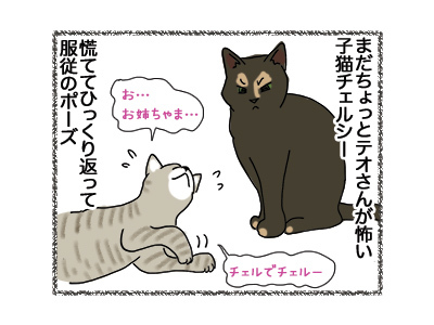 22052018_cat2.jpg