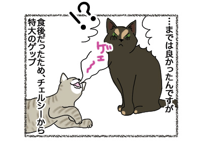22052018_cat3.jpg