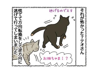 22052018_cat4.jpg